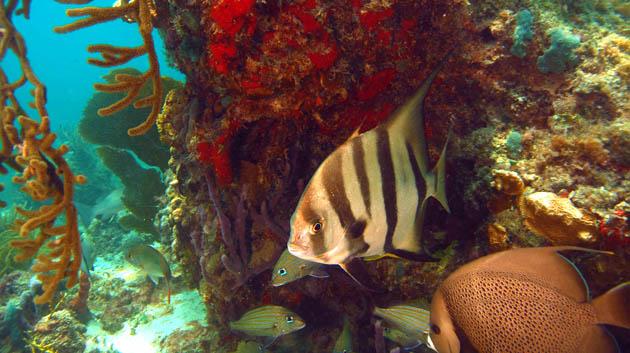 Coral-reef-Puerto-Morelos